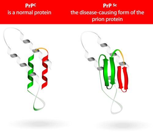New CF Therapies Possible Based on Research Into Protein Folding