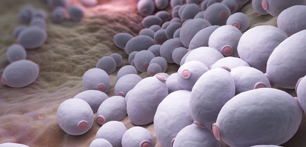 TGV-inhalonix's New Therapy Effective Against Resistant Fungal Lung Infections in CF Patients